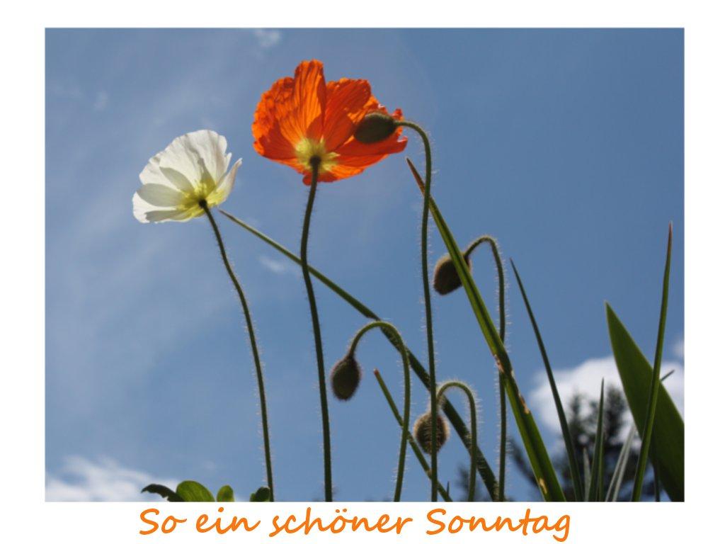 """Résultat de recherche d'images pour """"schöner sonntag"""""""