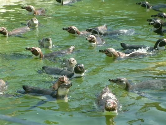 So eine Hitze! Da gibts nur eines, schwimmen gehen!!!
