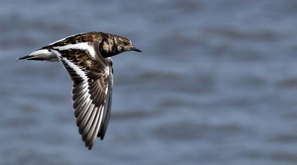 so fliegen müßte man können dann könnte man allen wattvögel bei uns einen besuch abstatten