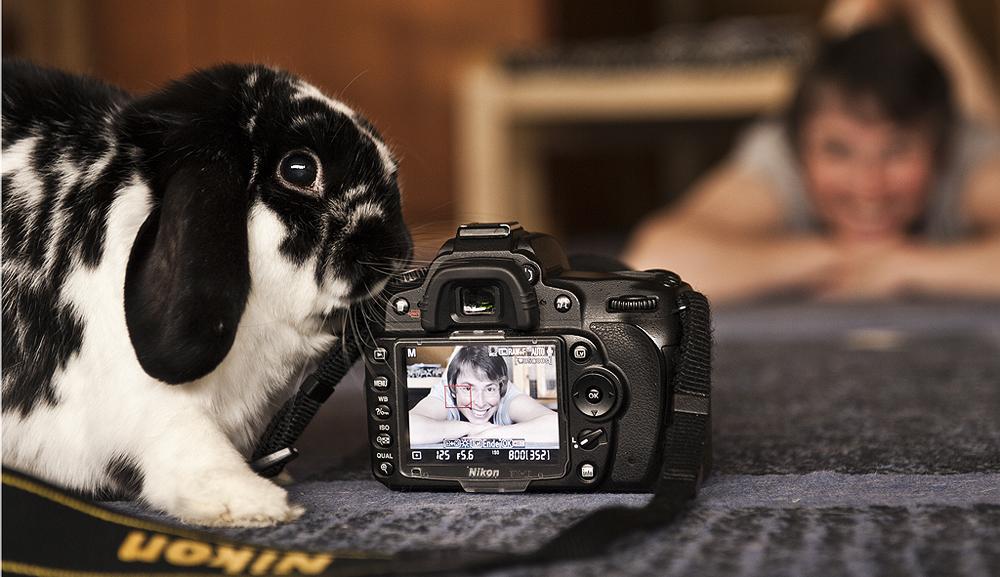 So geht Tierfotografie!