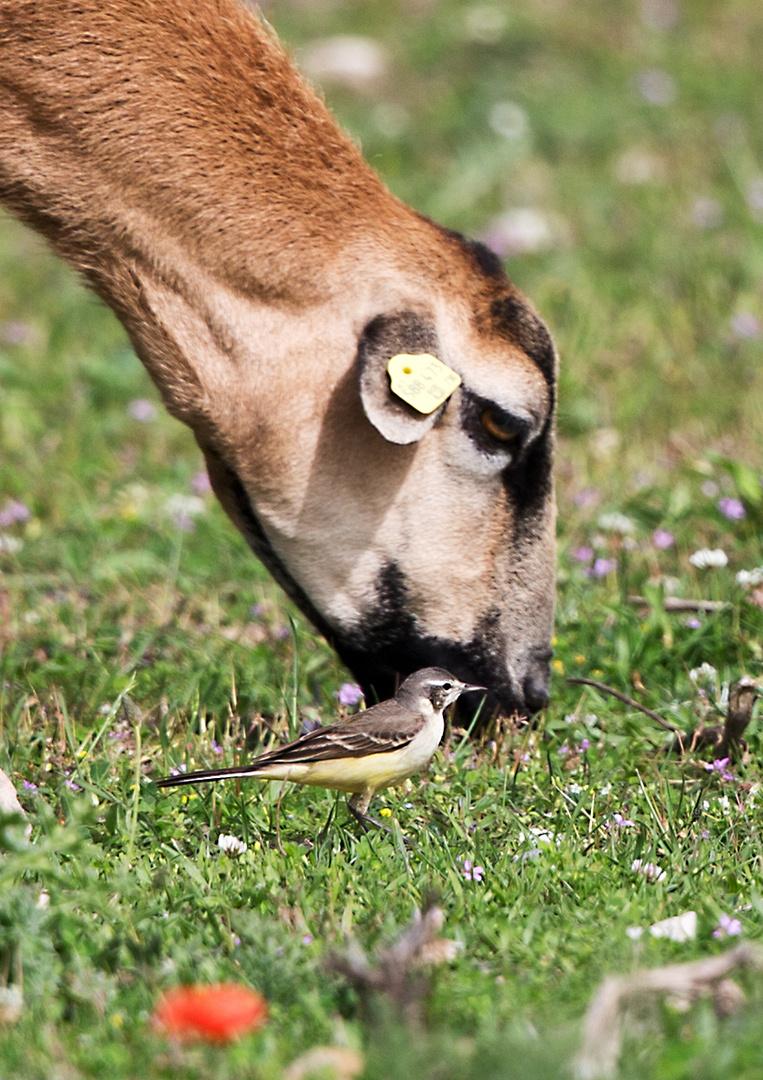 So ist die Vogelbestimmung einfach!