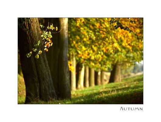 So kann er bleiben, der Herbst!!