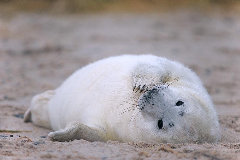 so klein und schon am Strand ...