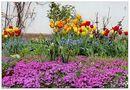 So könnte der Frühling bald aussehen.... von Wolfgang (Wolf)