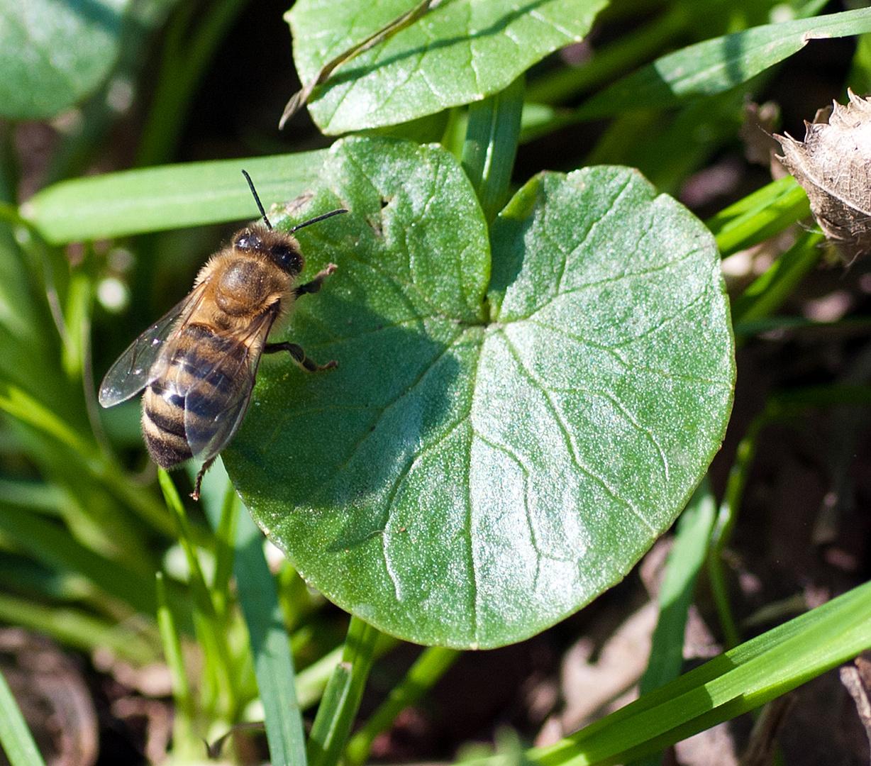 so langsam kommen die Insekten usw. wieder zum Vorschein