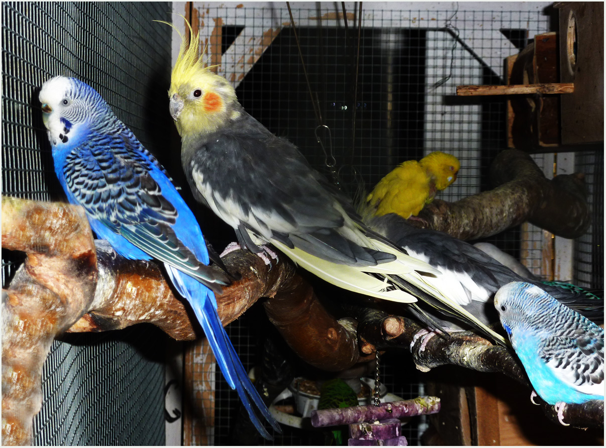 So leben unsere Vögel