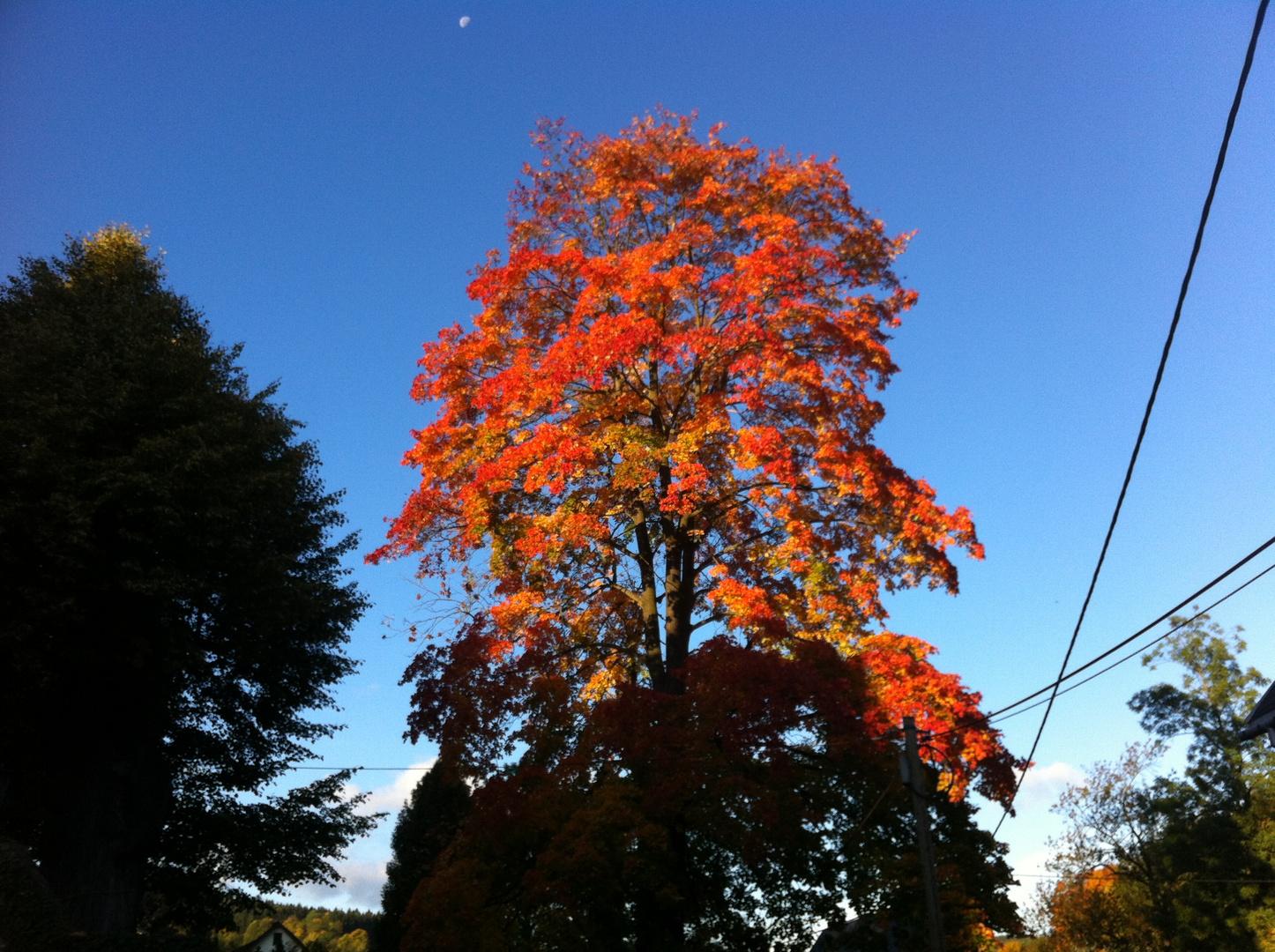 So leuchtet der Herbst