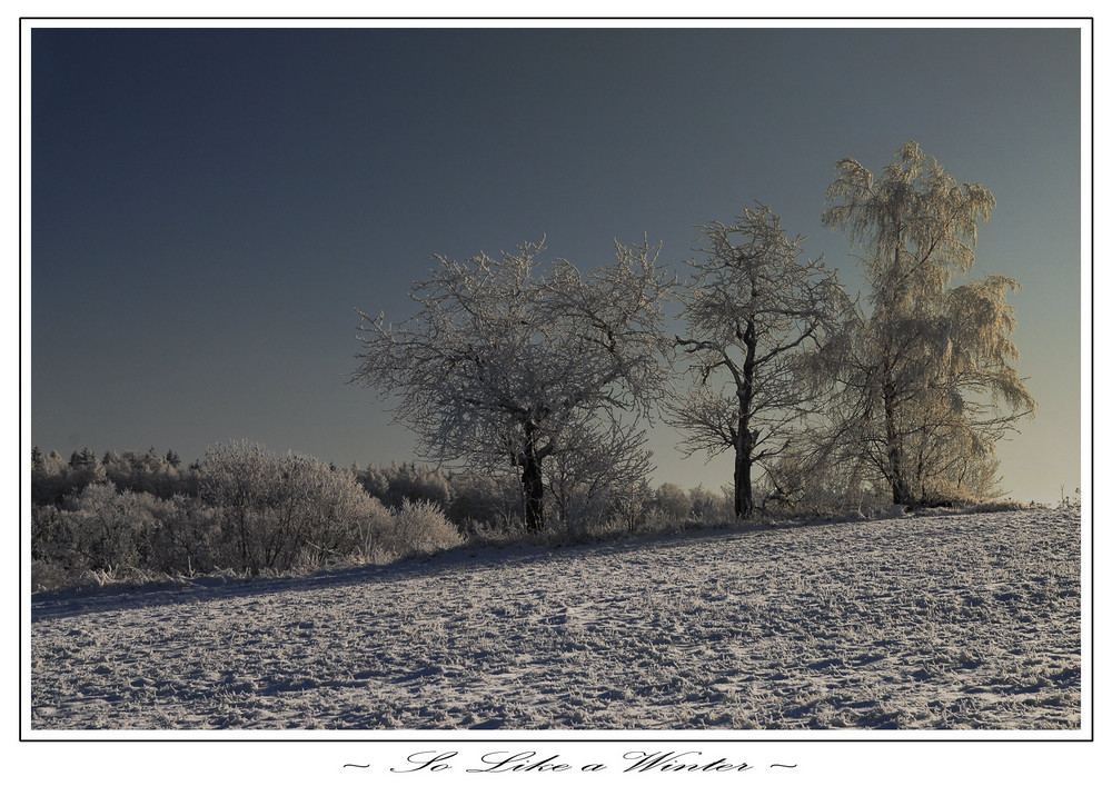 ~ So-Like-a-Winter ~