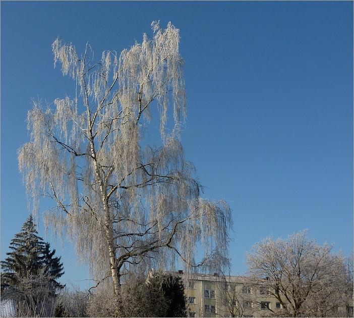 So mag ich den Winter