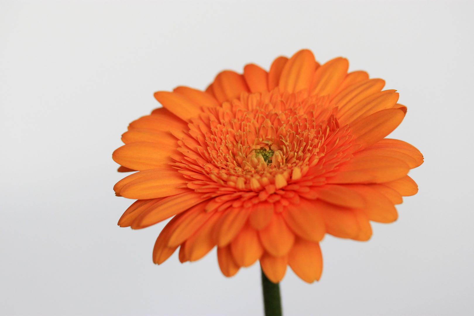 so orange.