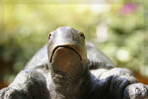 So rasend schnell wie Schildkröten