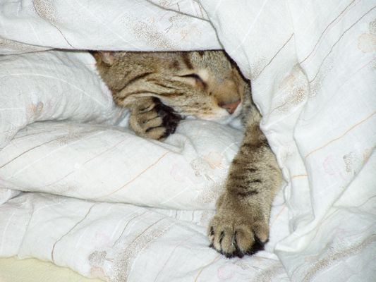 So richtig nett ist's nur im Bett