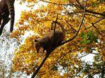 So riecht der Herbst