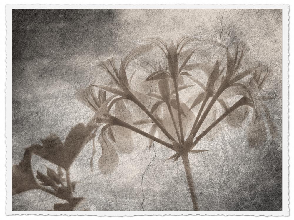 so sahen die Blumenbilder einmal aus