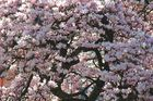 so schmeckt der Frühling....