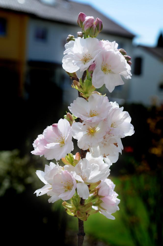 So schmeckt der Frühling ;-) I