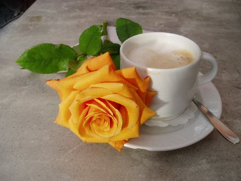 so schmeckt der Kaffee besonders gut