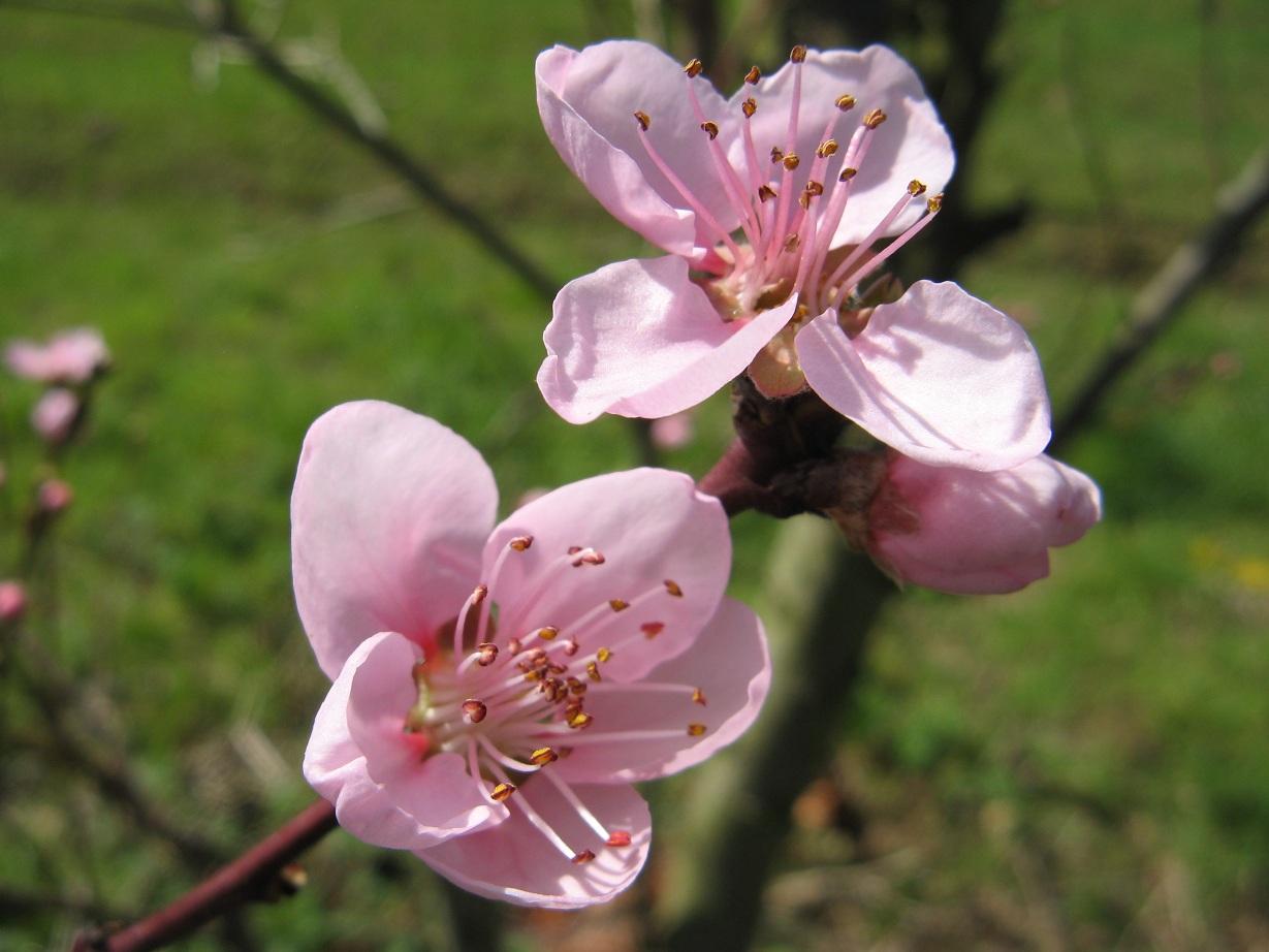 So schön blüht alles im Frühling
