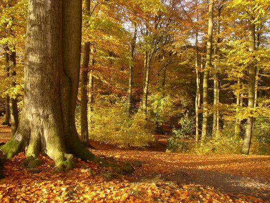 So schön ist der Herbst!