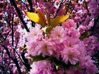 So schön kann der Frühling sein