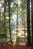 So schön kann der Herbst sein <3