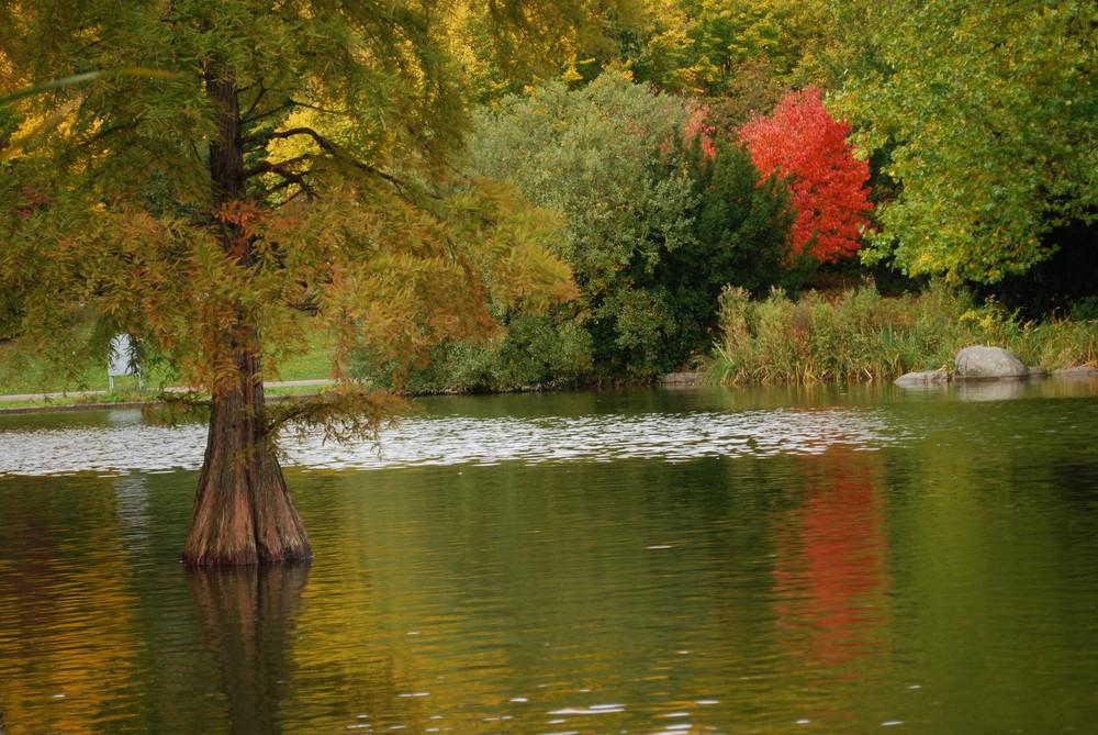 so schön kann es im Herbst sein