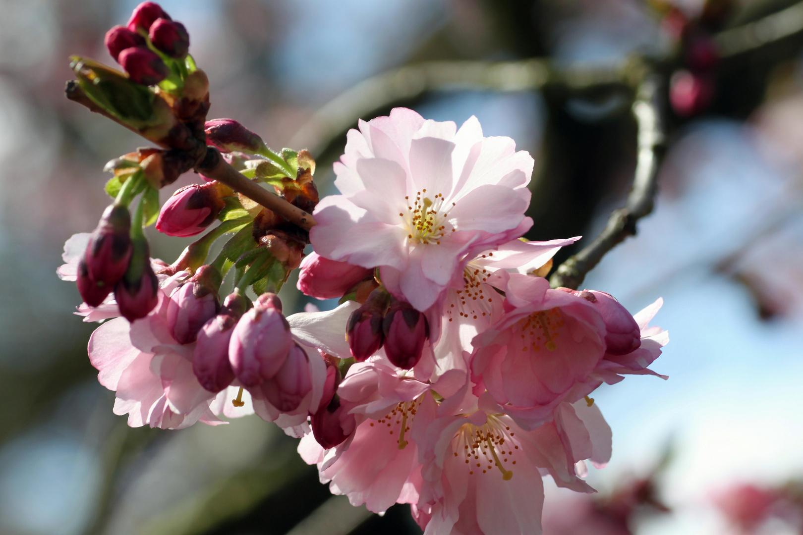 so schön kann Frühling aussehen