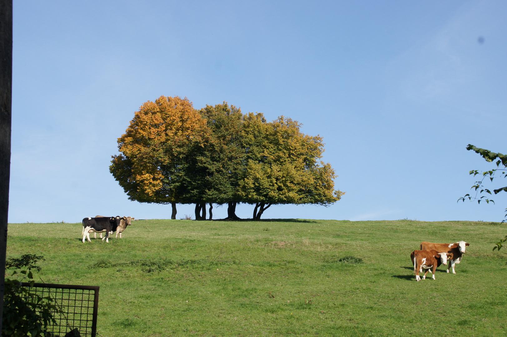 So schön kann Herbst sein ..........geht doch