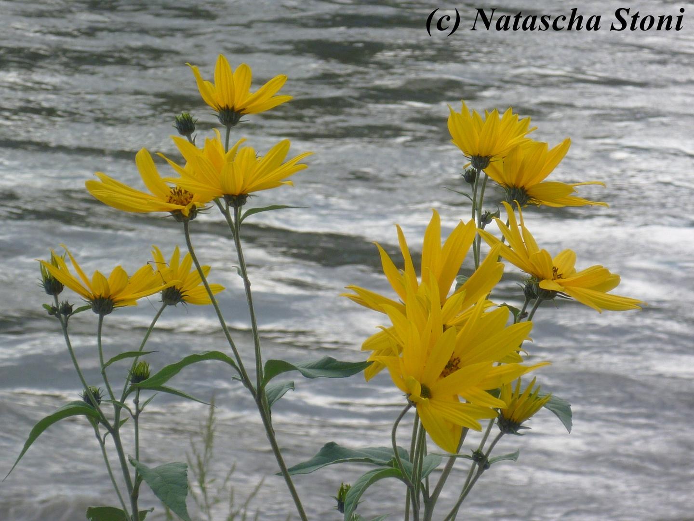 So schön kann Natur sein..