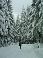 So schön kann Schnee sein