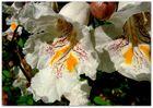 So schön, wie eine Orchidee