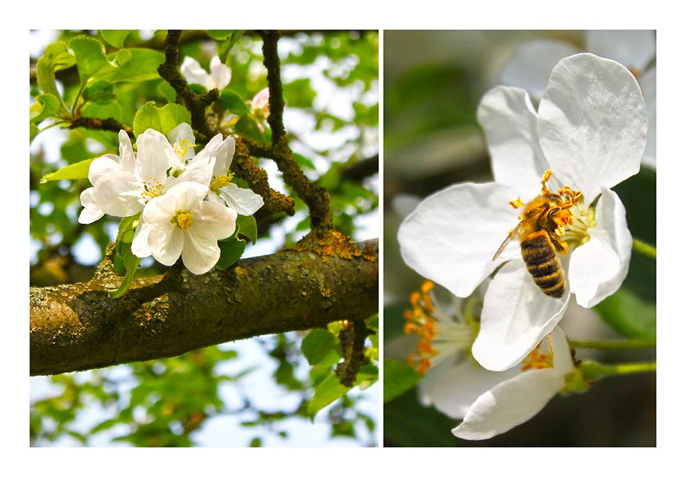 """"""" So sieht der Frühling aus....!"""