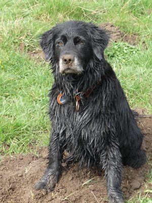So sieht ein glücklicher Hund aus: pitschnass und dreckig!