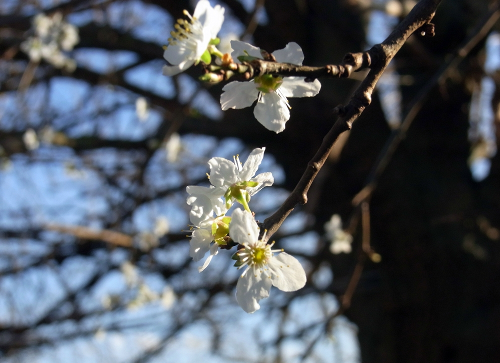 So sieht Frühling aus