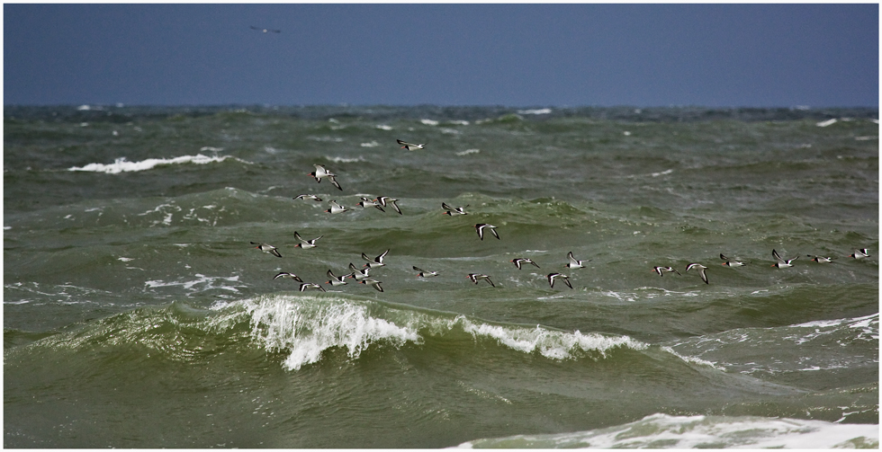 So soll Nordseeurlaub sein
