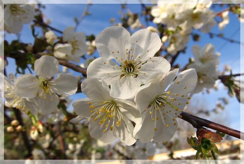 so spring, so tender