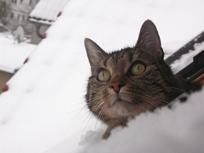 So viel Schnee !