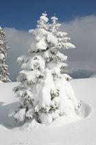 So viel Schnee und so wenig Baum