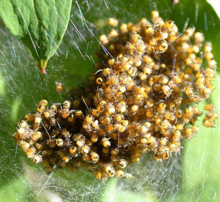 So viele Spinner auf einem Haufen!