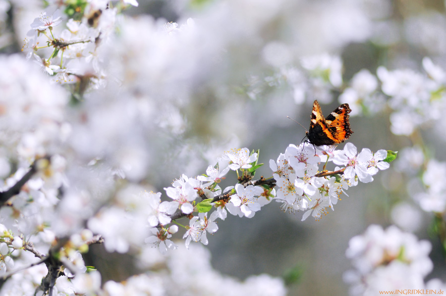So viiiel Frühling :)