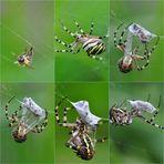"""so wird eine Biene """"versandfertig"""" gemacht ......."""