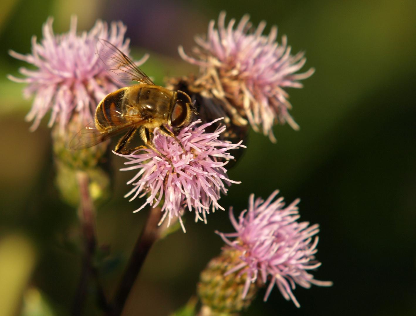 so zwischendurch ne Biene