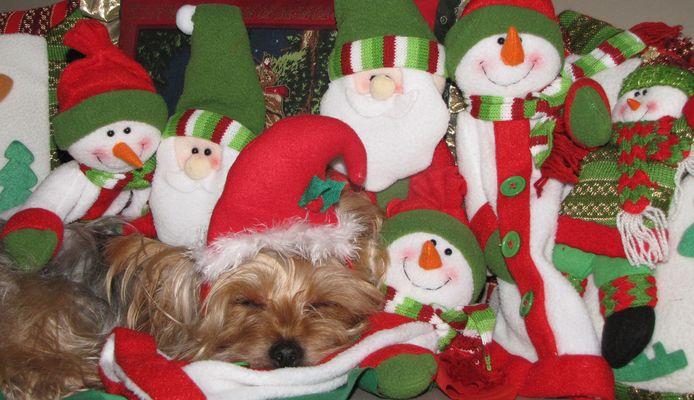 Soñando en la Navidad