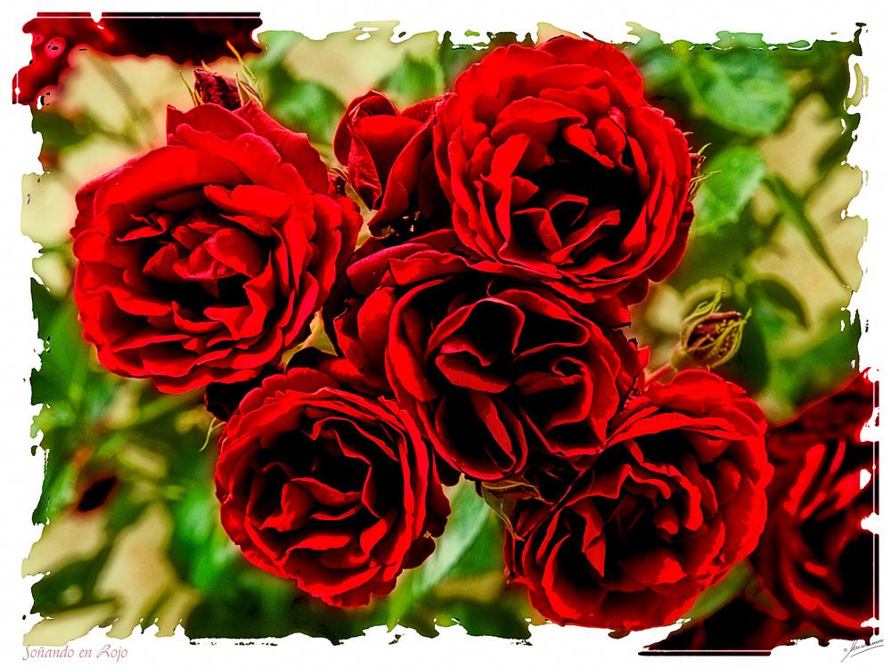 Soñando en Rojo