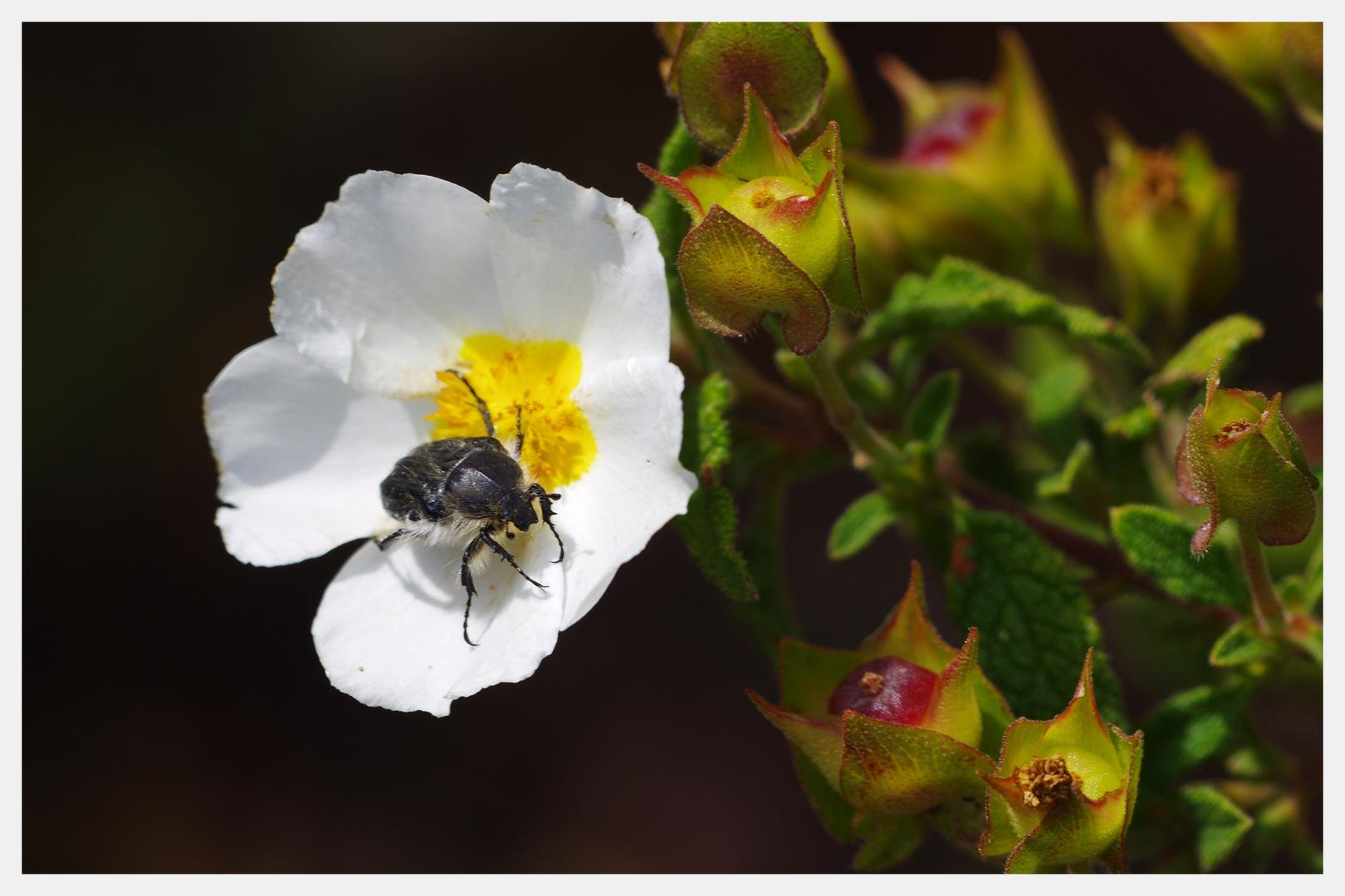 Sobre la blanca Flor