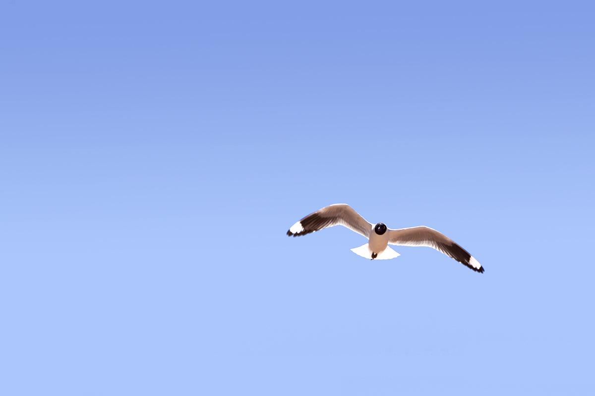 Sobrevolando