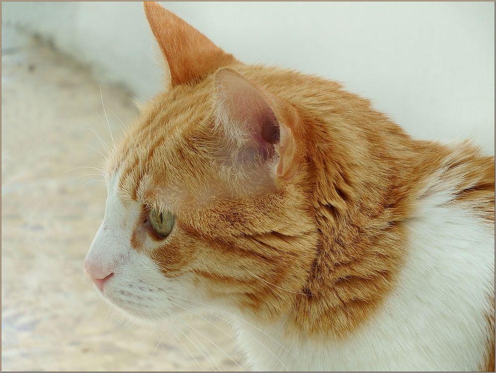 Socrates , my cat.