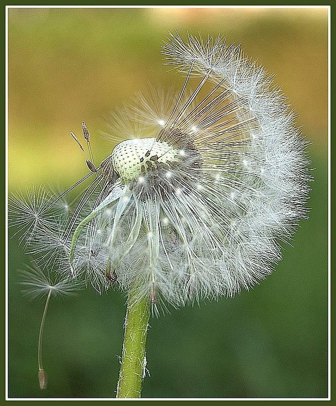 ...soffio di vento...