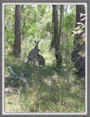Soft Colours of the Australian Bush