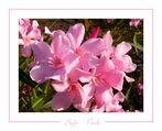 Soft Pink I